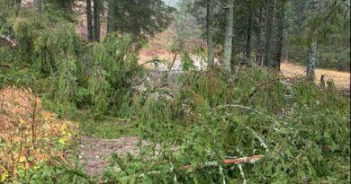 Vietor vyvracal stromy aj v Tatrách
