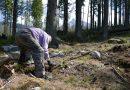 Vysadia vyše dvestotisíc stromčekov