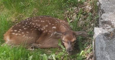 Mláďa jelenice po narodení
