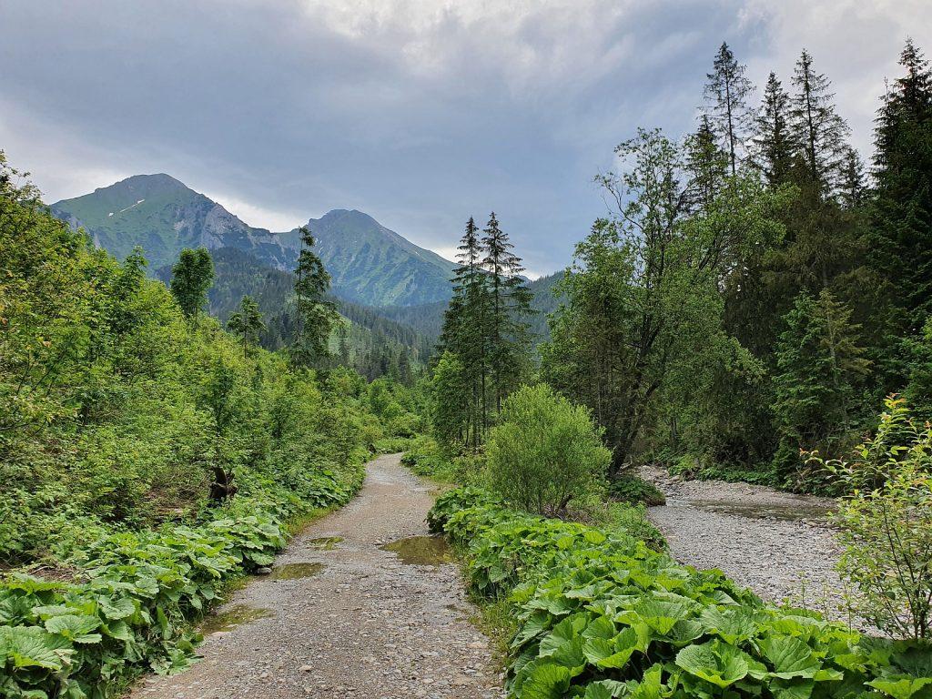 Prechod Monkovou dolinou vedľa Strednického potoka